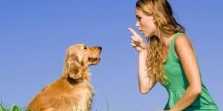 Conosci il tuo cane? Ecco come interpretare il suo linguaggio
