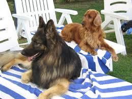 Strategie anti-caldo per il tuo cane: ecco cosa puoi fare