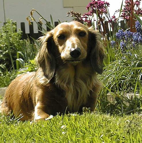 Come addestrare un cane a reprimere l'aggressività