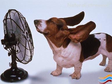 Consigli per mantenere la casa fresca soprattutto in estate!