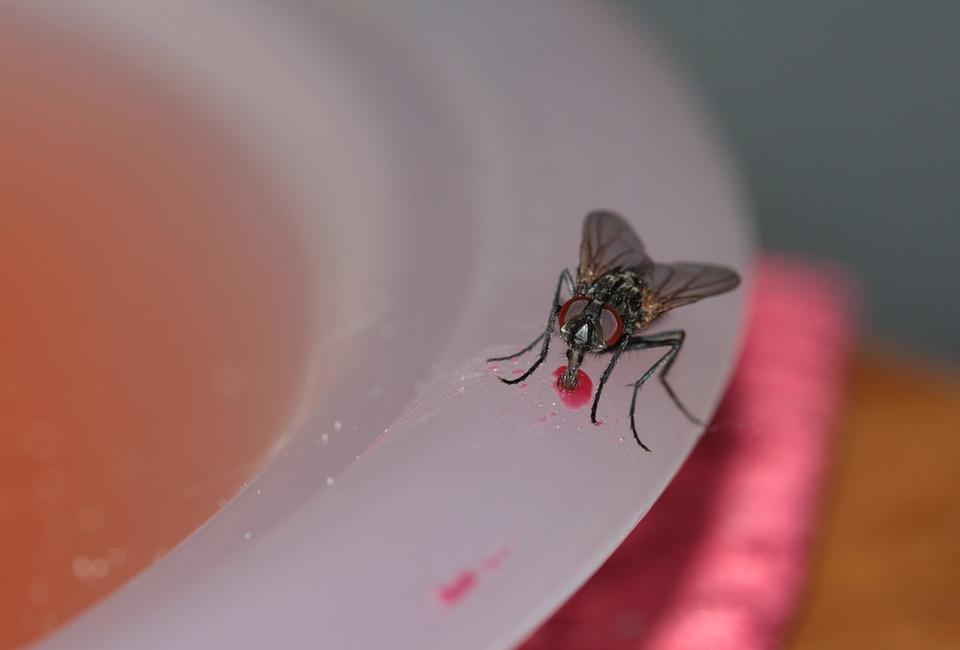 Come liberarsi degli insetti nocivi in casa