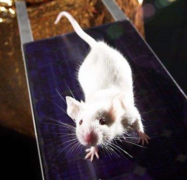 Trappole per topi efficaci: quando il coraggio non basta!